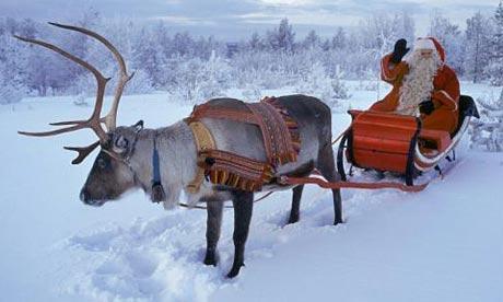 Reindeer in Finland