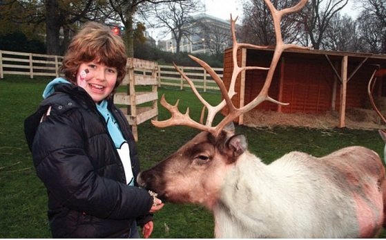 Kid petting a reindeer