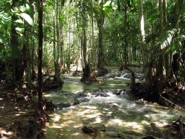 Forest river in Krabi