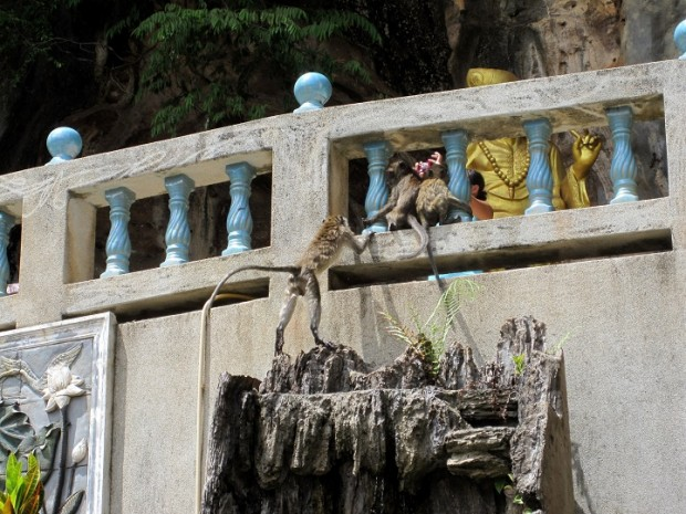 temple monkeys in thailand