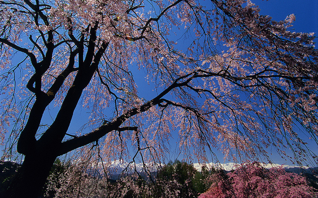 With colorful cherry blossoms breaking out everywhere and moderate temperatures, spring is the best time to visit Japan