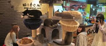 cat cafe in London